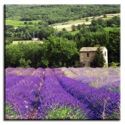 Wanduhr Design Küchenuhr Lavendel Shabby 34cm qarzuhr rund retro Quarzuhr neu